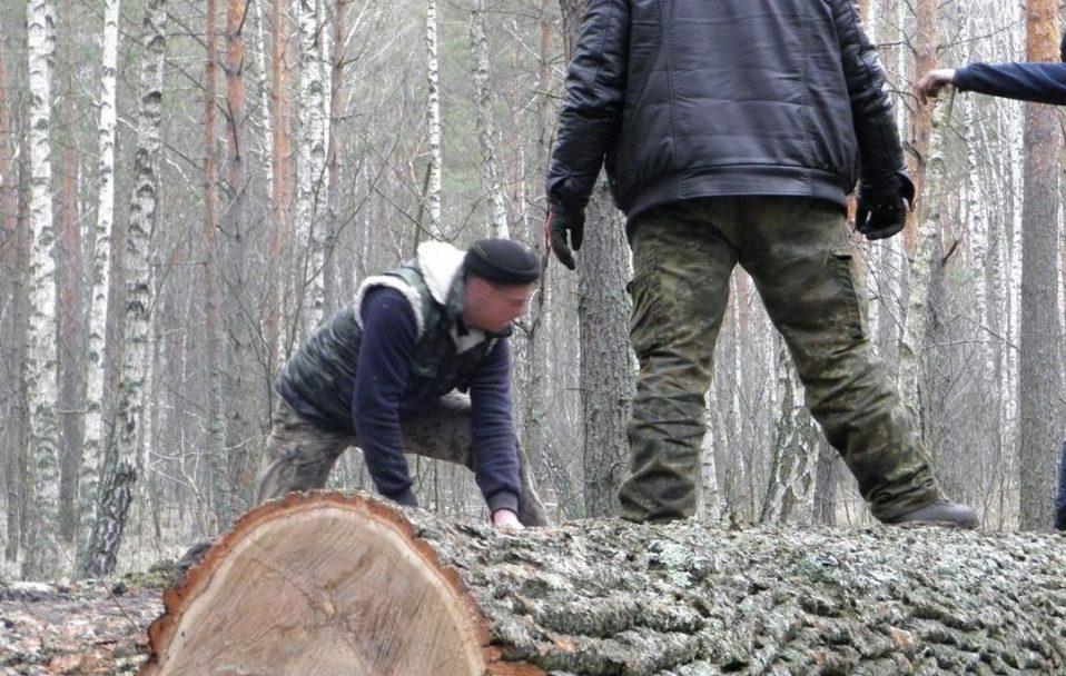 На Волині зловили КамАЗ і ЗІЛ з незаконною деревиною. Автомобілі і вантаж – вилучили