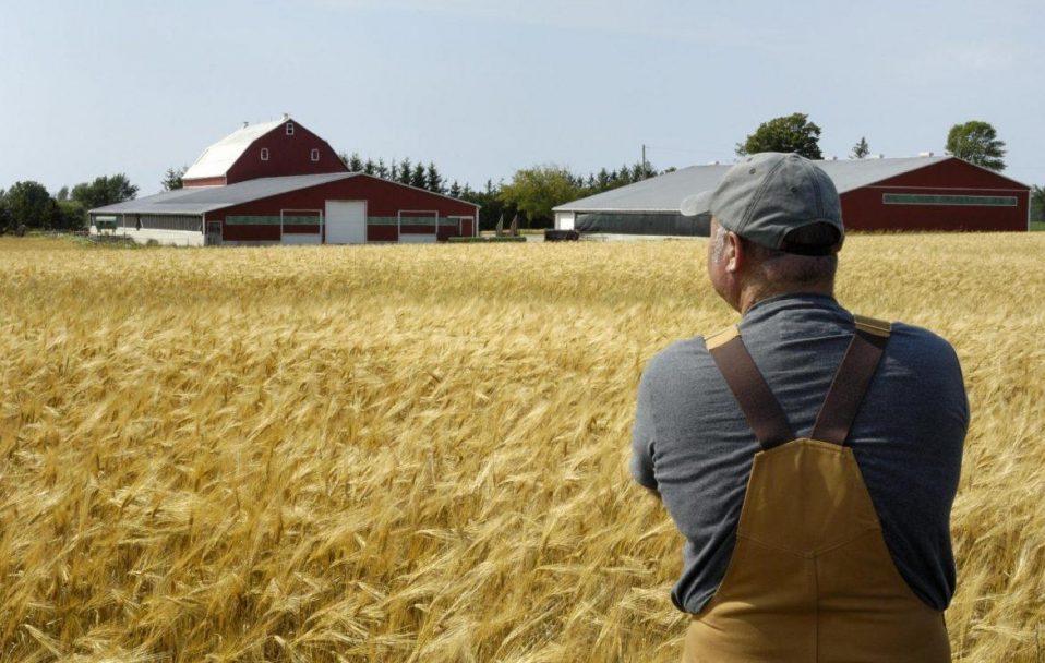"""""""Нічийні землі"""": чому волинські фермери вже навесні можуть залишитися без полів. ВІДЕО"""