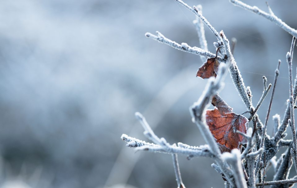 На Волині прогнозують до 5 градусів морозу