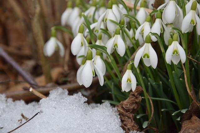 Зима не здається: на Волині прогнозують нічні морози і сніг