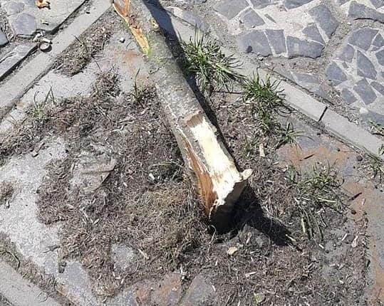 У центрі Луцька водійка знесла дерево і втекла. ФОТО. ВІДЕО