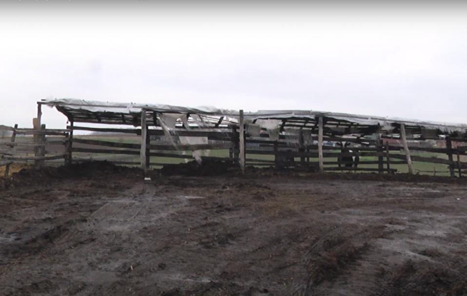 У Заборолі на фермі розкопали людський скелет. ВІДЕО