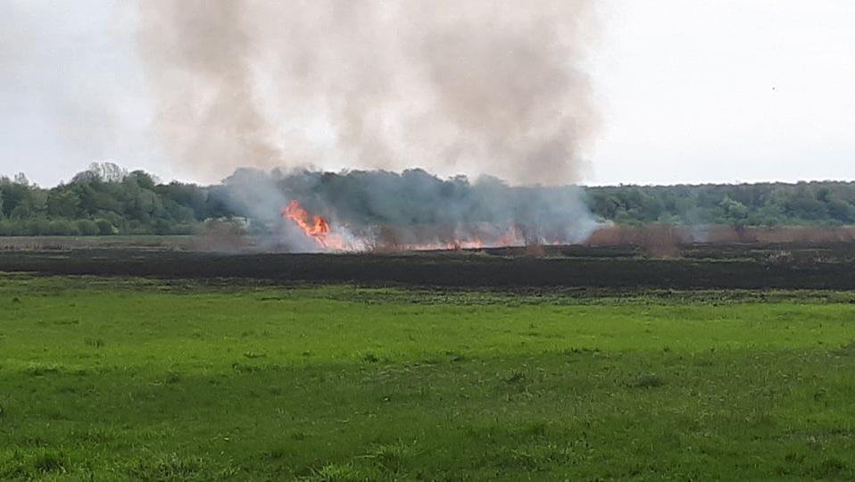 Через підпал у Луцьку згоріли понад 40 гектарів трави. ВІДЕО