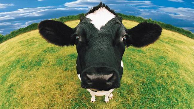 Молочний бізнес: як подружжя з Волині заснувало власну ферму. ВІДЕО