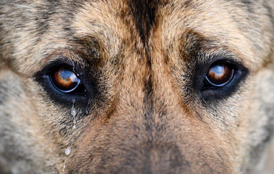 На Волині судять живодера, який познущався над собакою
