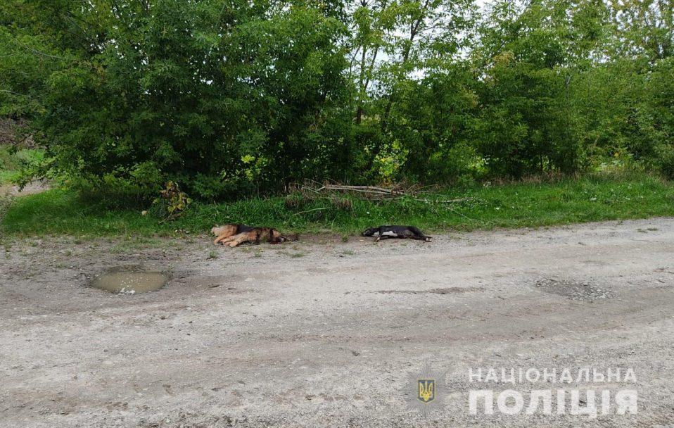 Під Луцьком пенсіонер застрелив двох собак. ФОТО