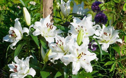Фестиваль квітів «Осінь у Волинській Голландії» продовжили