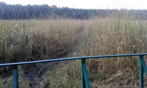 Чи врятують легендарне озеро Нечимне на Ковельщині. ВІДЕО