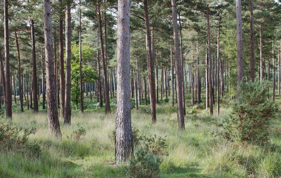 У лісі на Волині знайшли тіло чоловіка
